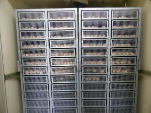 烏骨鶏卵 孵卵器 発生台車