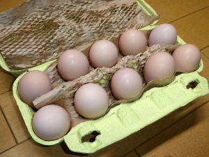 烏骨鶏ギフトの烏骨鶏の卵